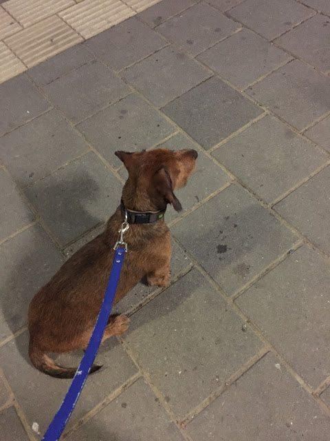 Met Milo op het station