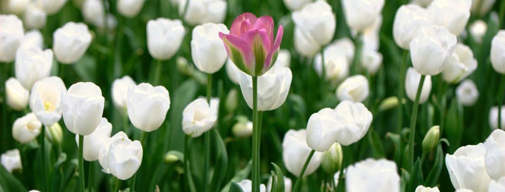 onzichtbaar-ziek-wereld-onbegrip-fibromyalgie-blog