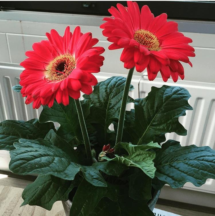positiviteit-in-huis-bloemen-roze-fibromyalgieblog