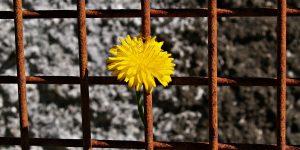trots-fibromyalgie-fibromyalgieblog