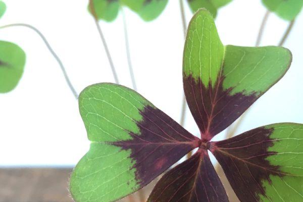 Genieten kleine dingen - fibromyalgieblog
